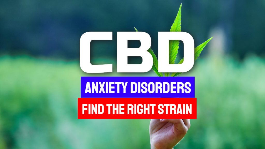 CBD And Anxiety Disorders – Find The Right Strain For You